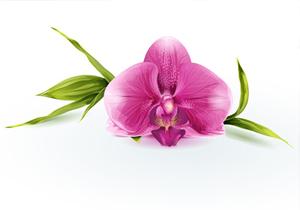Une orchidée facile à entretenir !