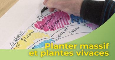 Planter un massif de plantes vivaces