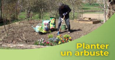 Planter un arbuste