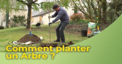 Comment planter un Arbre ?