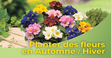 Planter des fleurs en Automne Hiver