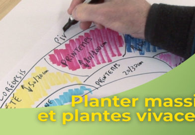 Planter massif de plantes vivaces