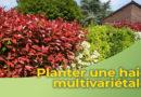 Planter une haie multi-variétale