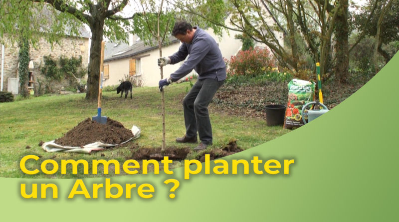 Comment planter un Arbre ?