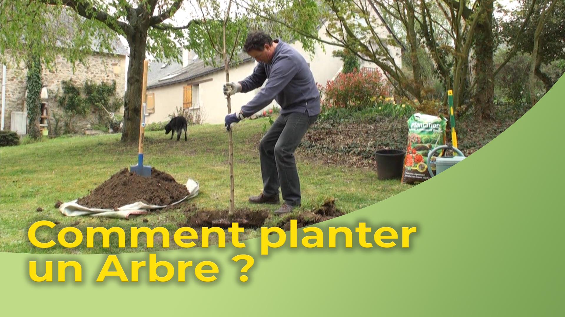 Comment Planter Un Arbre Fruitier comment planter un arbre ? - objectif habitat
